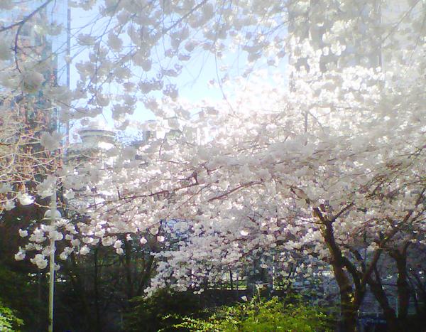The Spring Streams have Sprung!