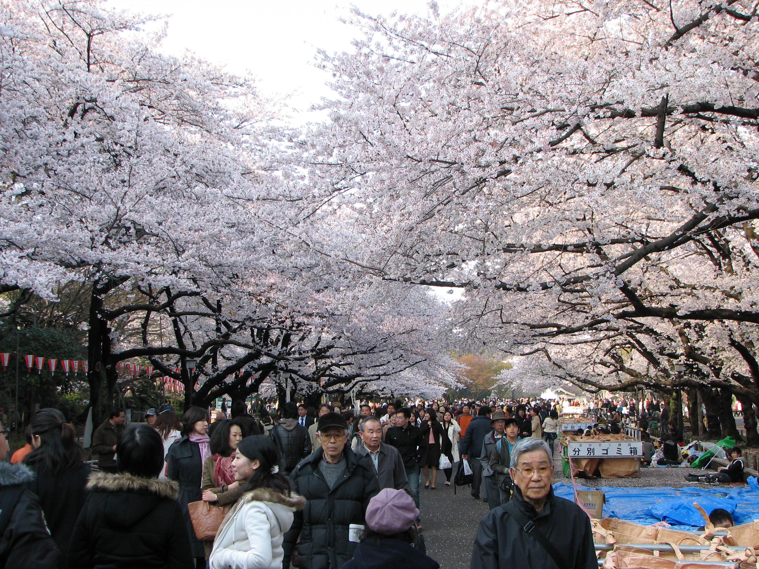 An Insider's Look at Japan: Ueno Koen