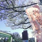 sakura matsuri 03